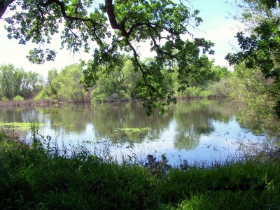 Slough... Cosumnes River